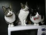 2010年三猫.jpg