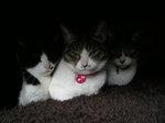 三猫こたつ2014.JPG